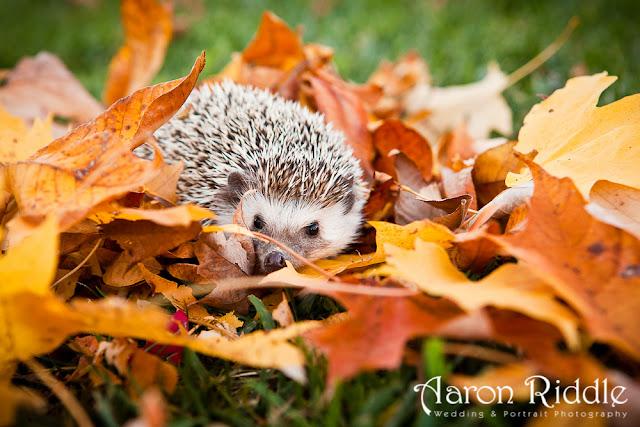 Autumn Animal Images5