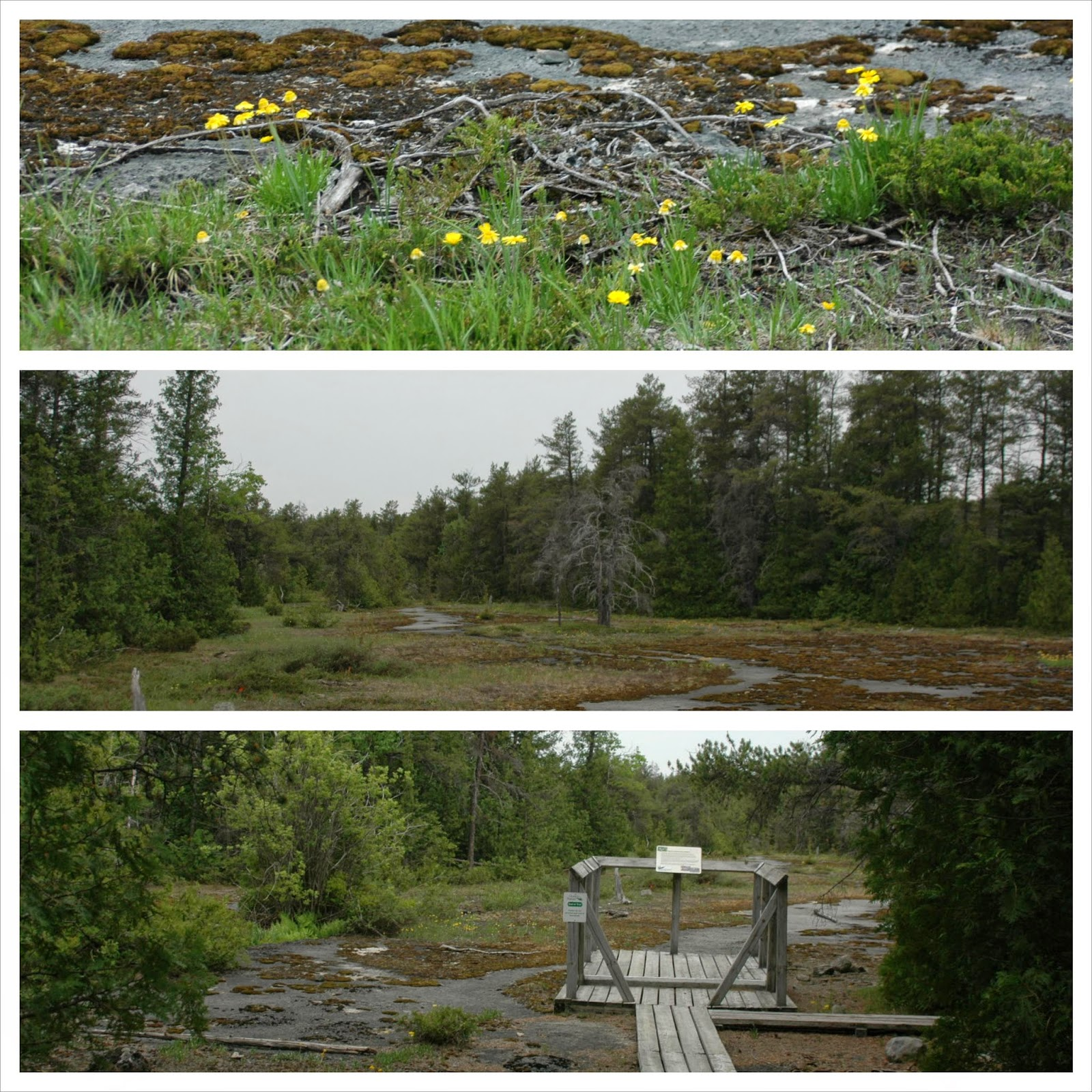 Habitat of Tetraneuris herbacea