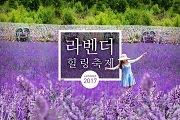 Lavender Healing Festival