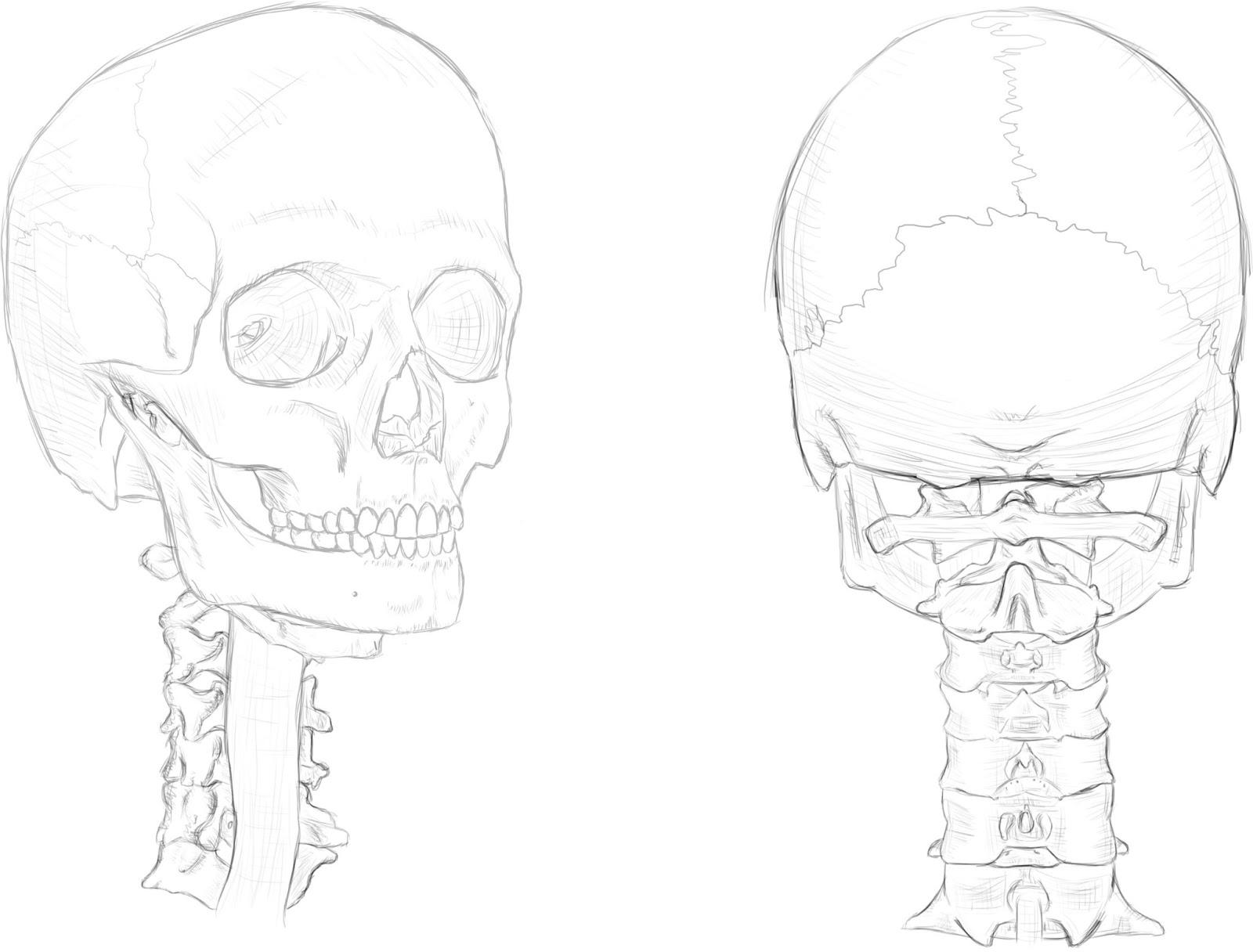 Project Aither: Estudio anatómico: El esqueleto, parte 1