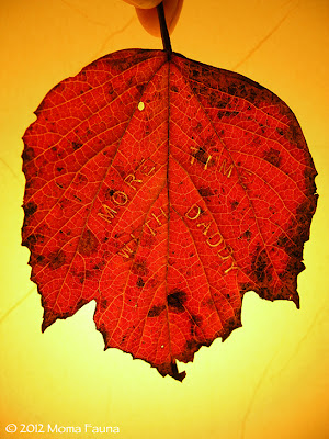 "Autumn Equinox: a child's ""Hearthfire Wish."""