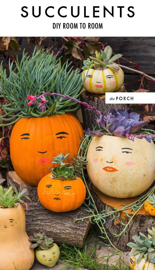 DIY succulent pumpkin faces