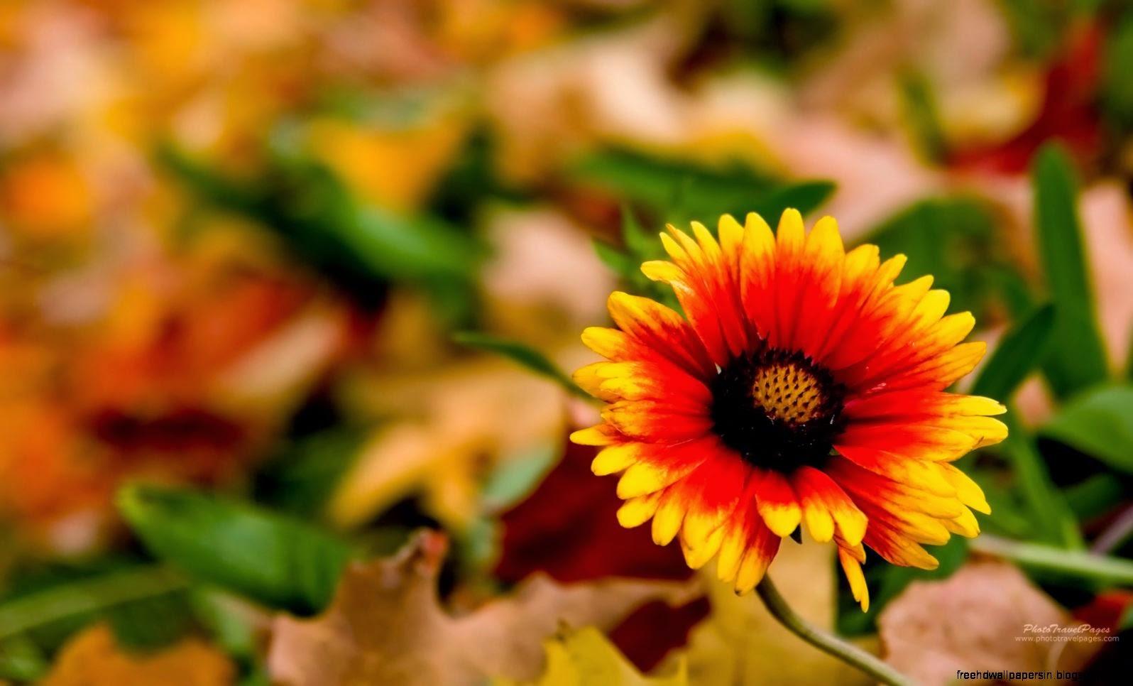 Fall Flower Desktop Wallpaper | Free HD Wallpapers