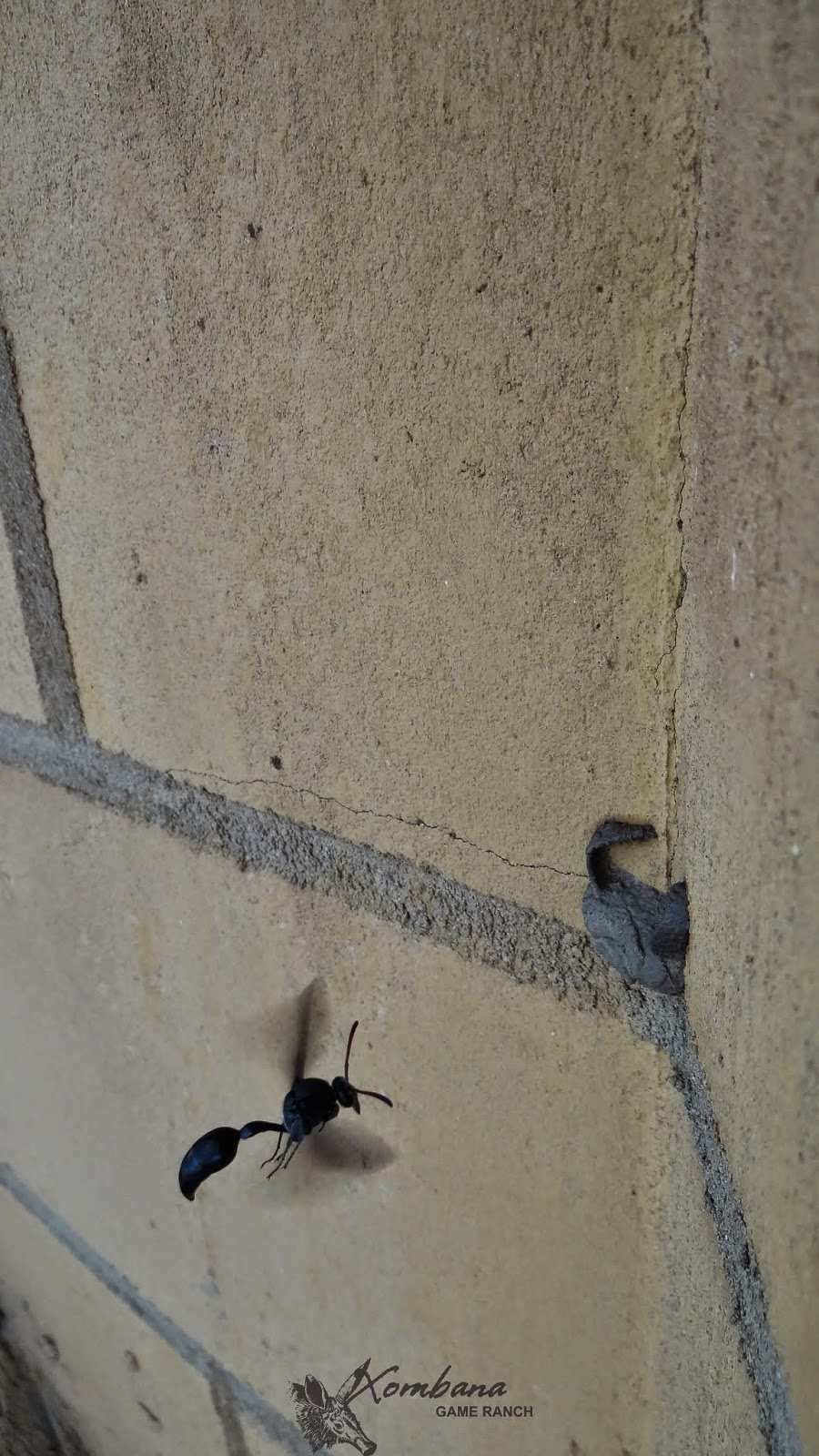 Gathering   The Waterhole  Building A Nest