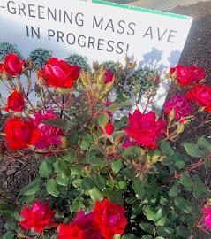 Rosebed at Sheridan Circle