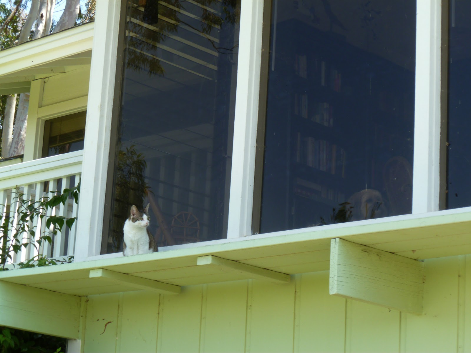 Banar designs cat on a hot tin roof for Hot tin roof custom home design