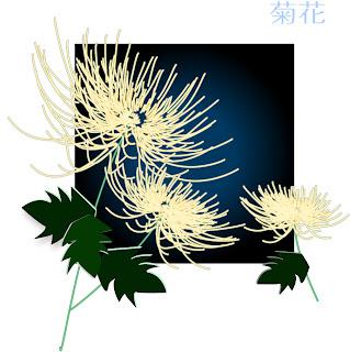 優美な菊の背景 EXQUISITE CHRYSANTHEMUM VECTOR