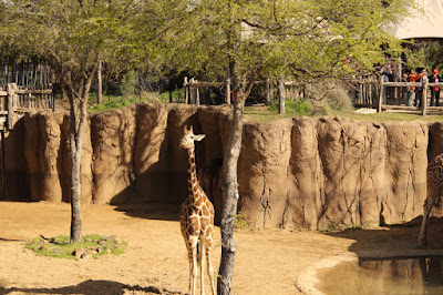 """Cena de """"A Bebê Girafa"""" - Divulgação"""