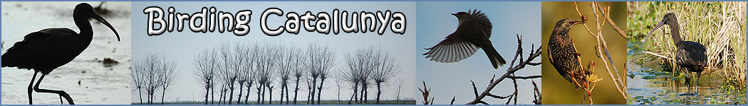 Birding Catalunya