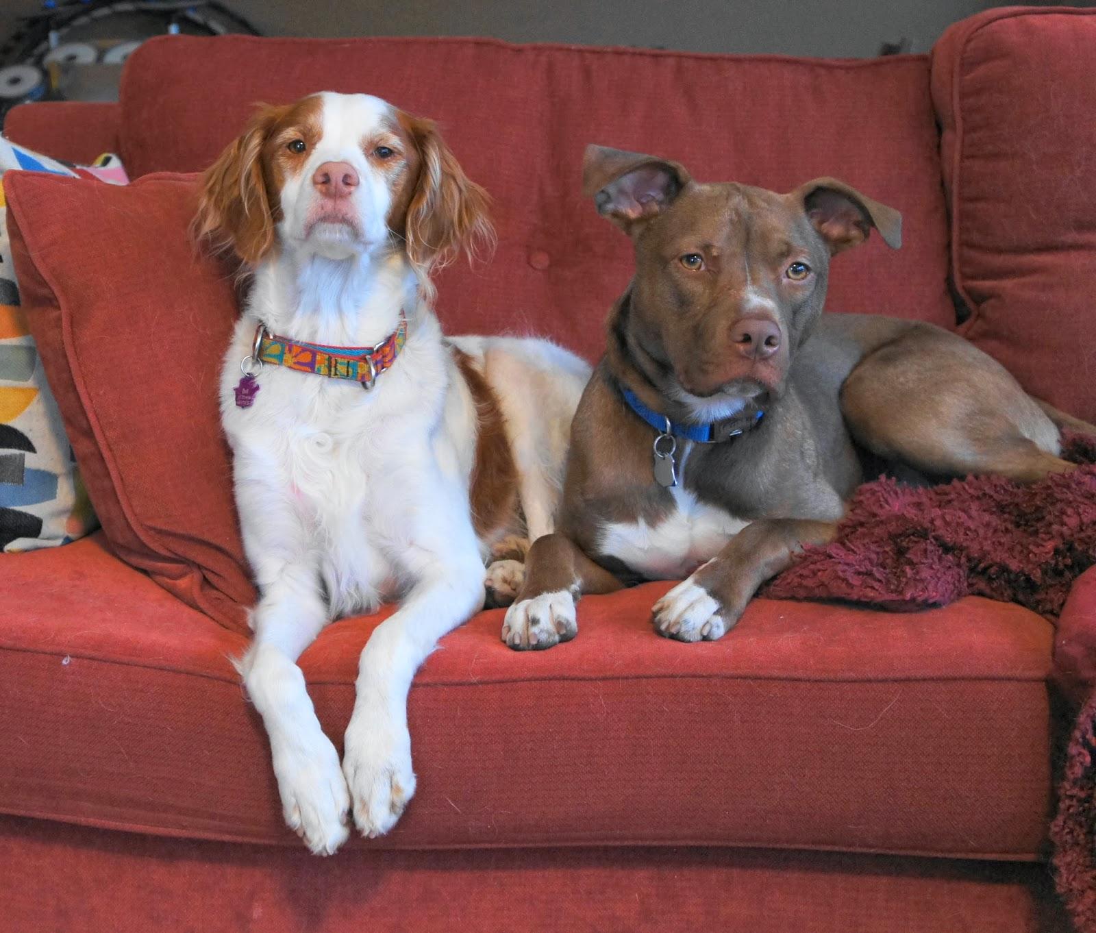 Image Result For Dog Training Dvds
