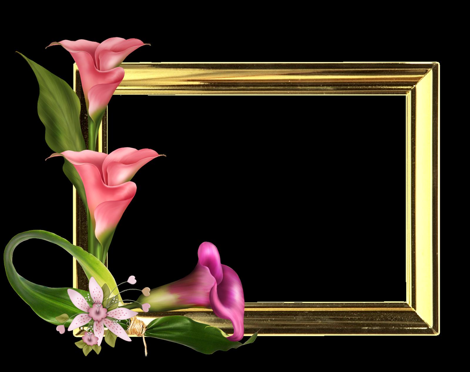 Marcos Florales para Fotos - Formato PNG - Gratis! - Marcos Gratis