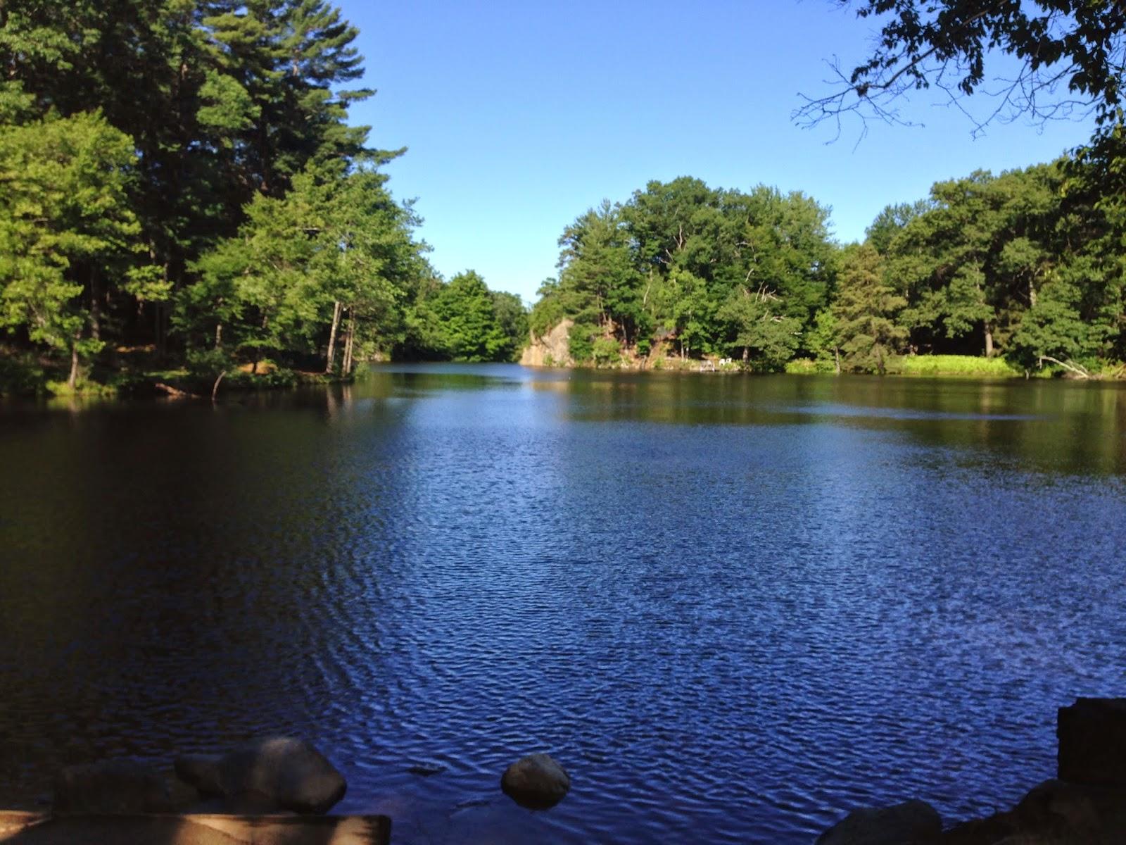 renew summer scenes of natures beauty