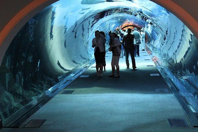 شاهد اكبر بالعالم Dubai-Aquarium.jpg