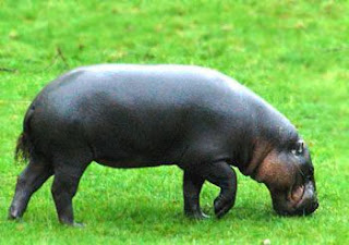 Steely Dan band name inspiration - Naked Lunch - Hippo