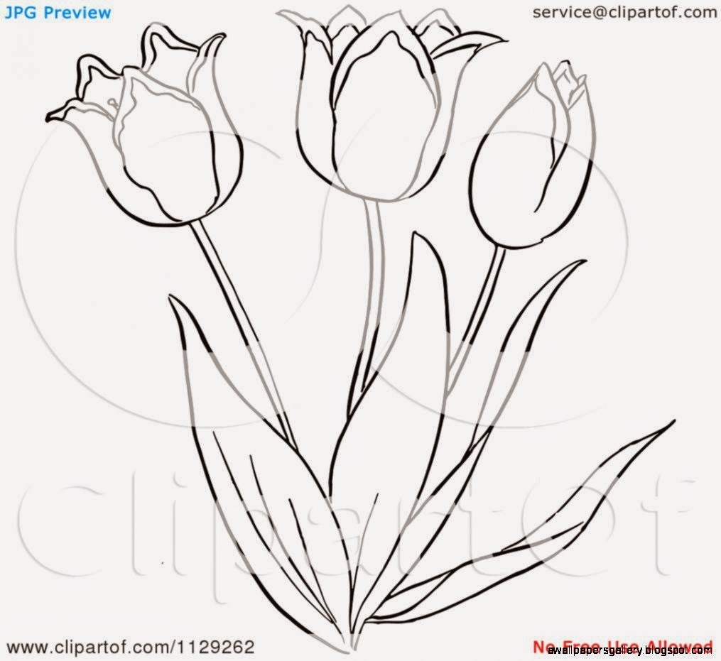 Eleletsitz Tulip Clipart Black And White Images