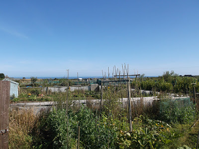 St Ives Allotment - Summer 2015