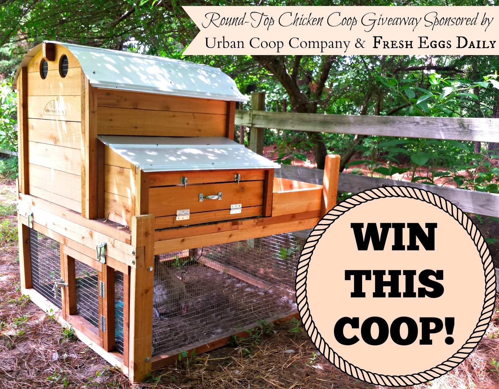 giveaway urban coop company round top chicken coop fresh eggs