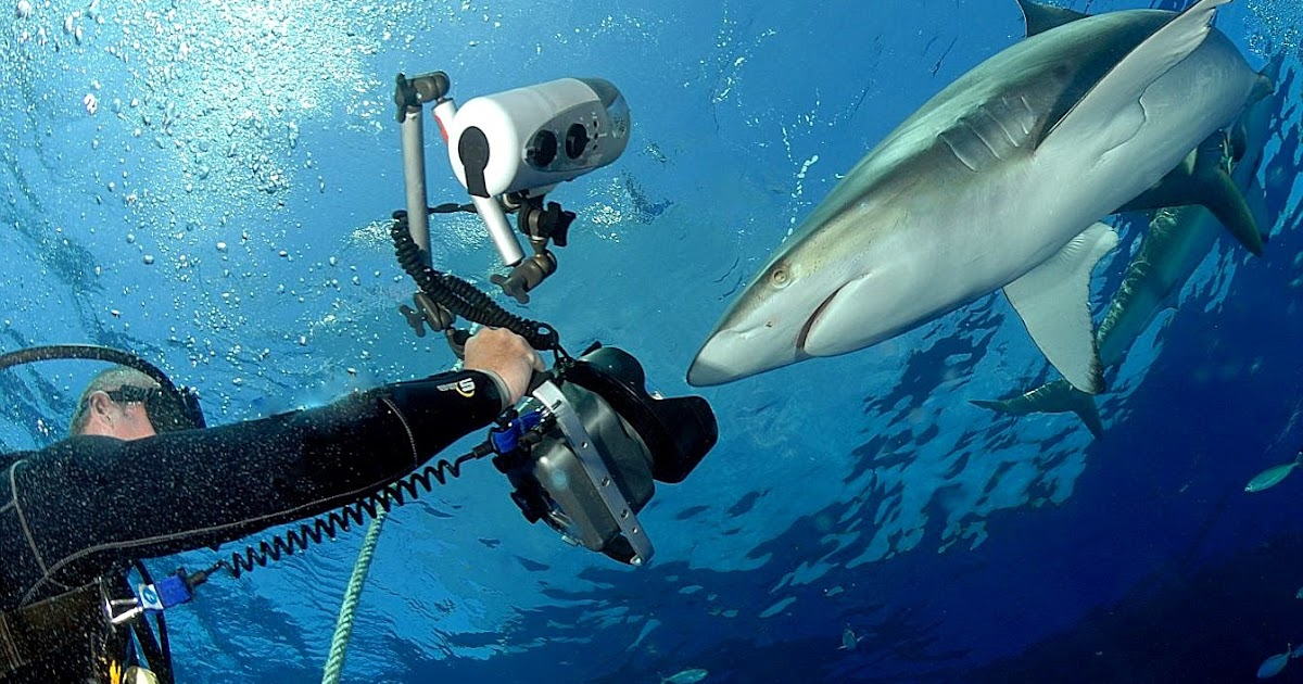 The Best Shark Dive in the World!: Silkies vs Grey Reefs ...