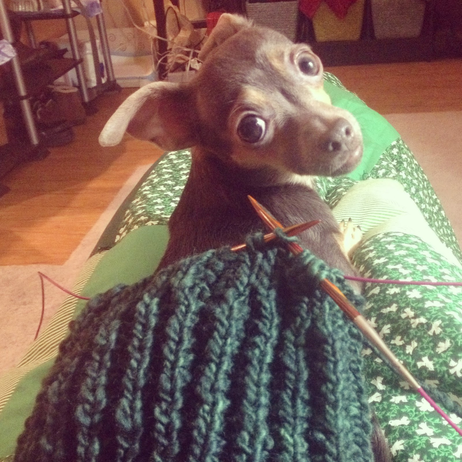 Knitting Helper - She Knits in Pearls