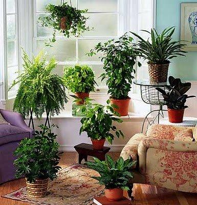 Dicas de jardim plantas para interiores para sua casa ou apartamento - Plantas grandes para interiores ...