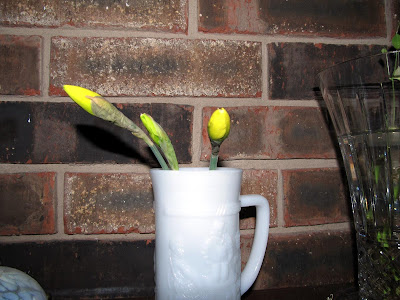 Annieinaustin, cut buds of daffodil in vase