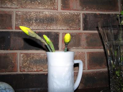 Annieinaustin, cut buds of daffodil in vase