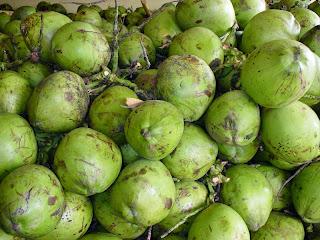 Health Benefits of Coconut (Coconut, Cocos nucifera Linn)