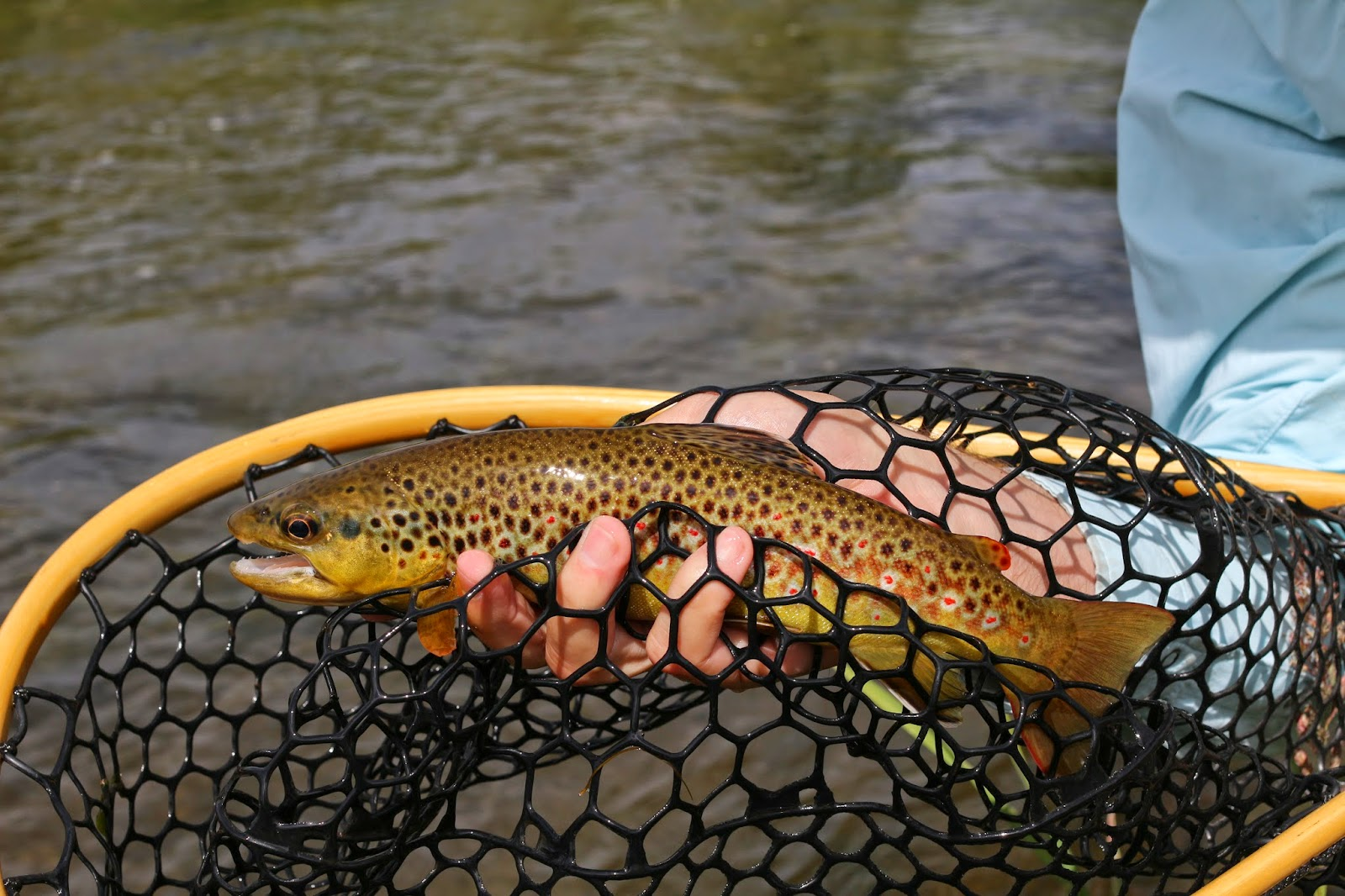Fly+fish+the+Roaring+Fork+River+in+Colorado+with+Jay+Scott+Outdoors+8.JPG