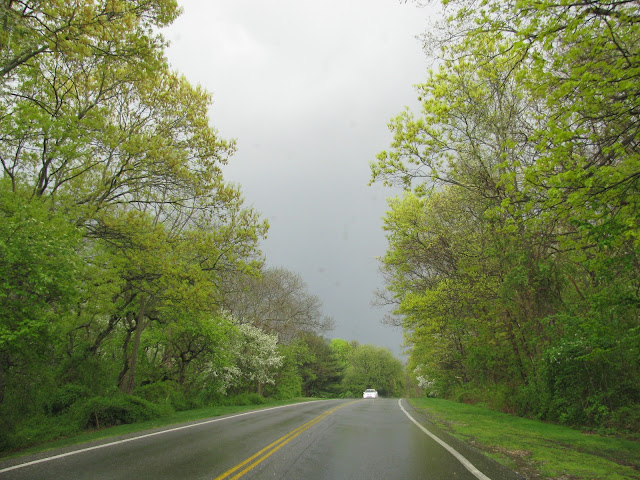 Spring-Rain-at-Bethpage-State-Park-in-Farmingdale