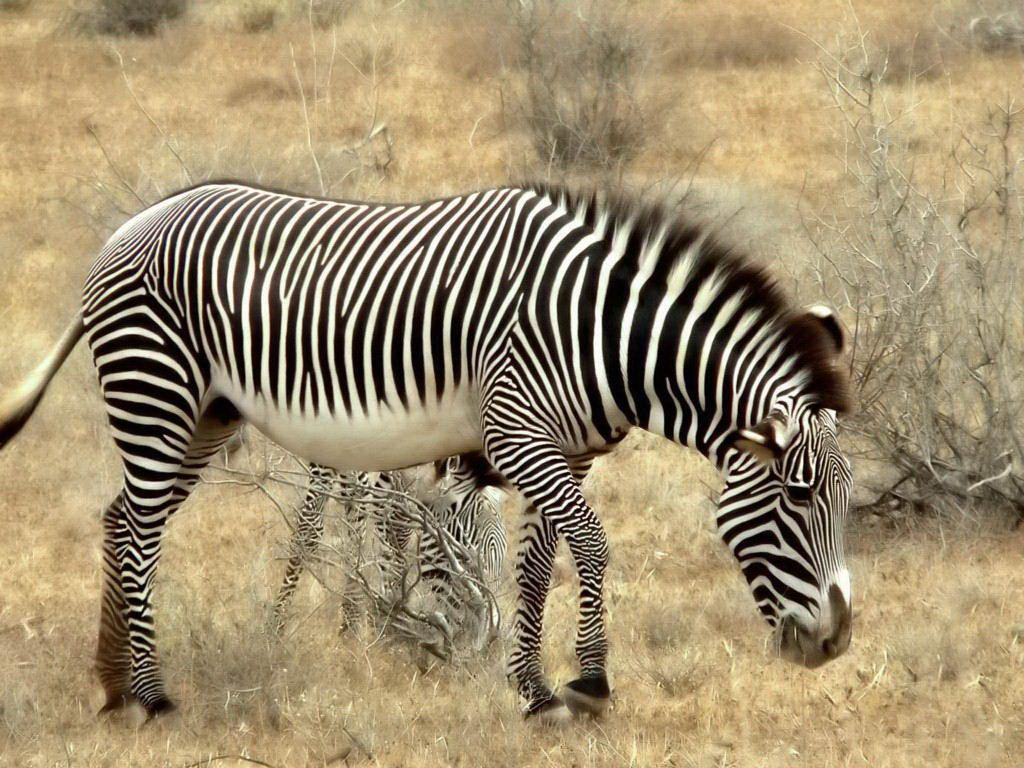 dibujos animales salvajes: