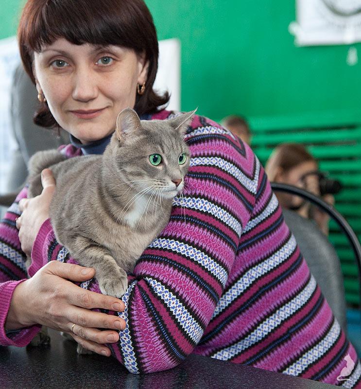 Выставка кошек в Реутове, шоу домусов, домусы, Бисмарк