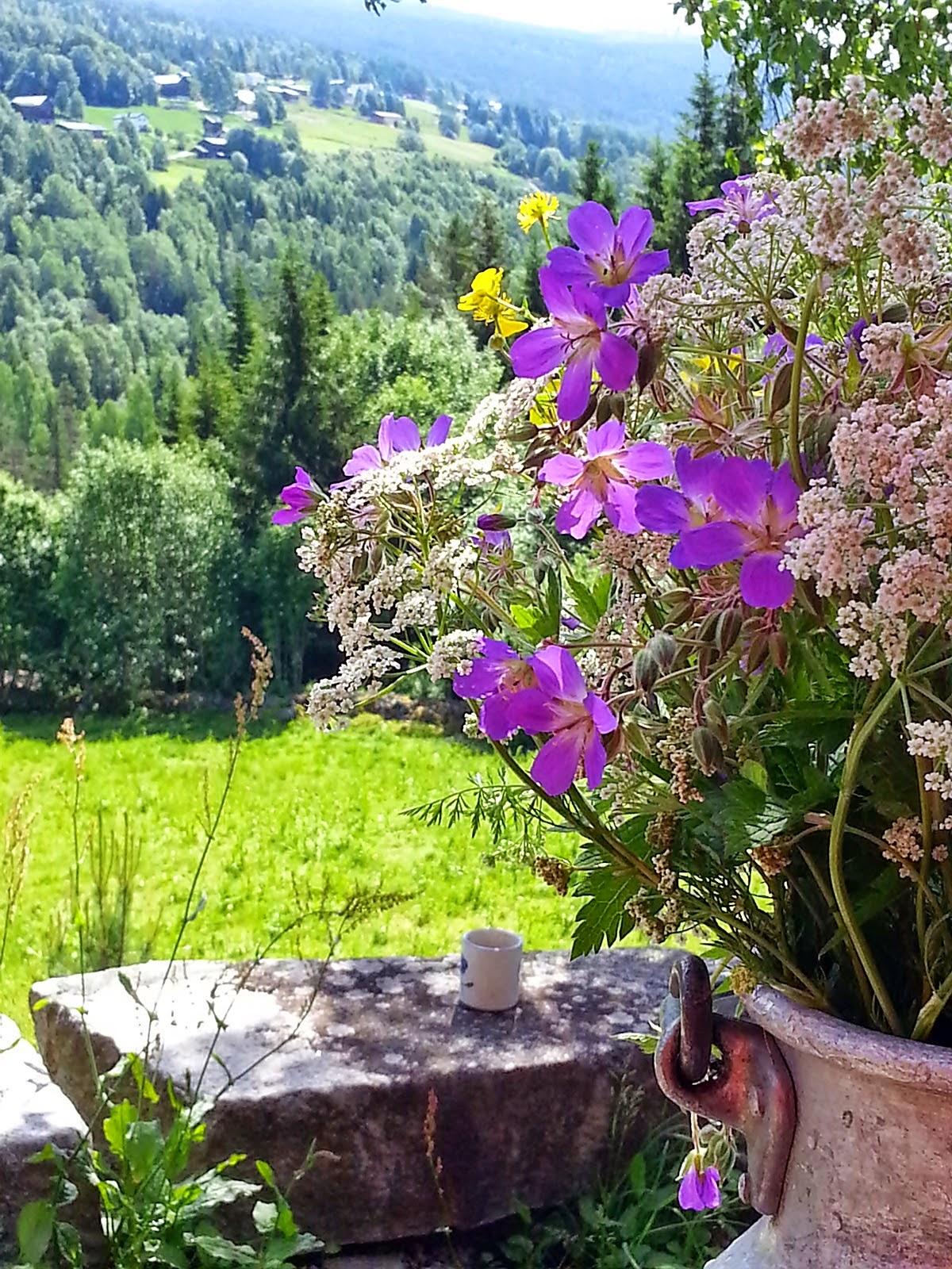 Sommer i Tinn - Telemark