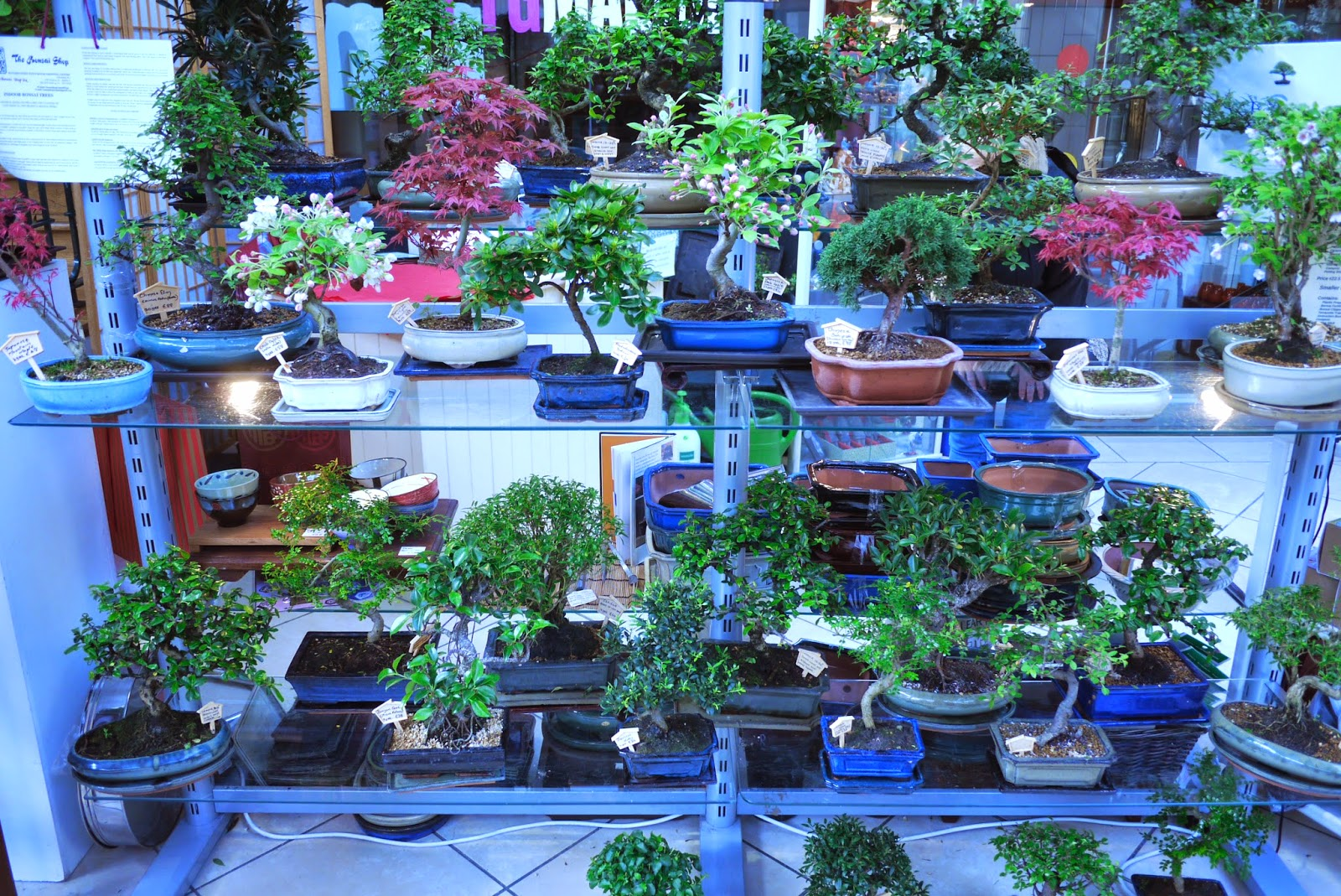 Bonsai Shop Ireland Photos
