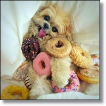 Picture of dog surrounded by donuts