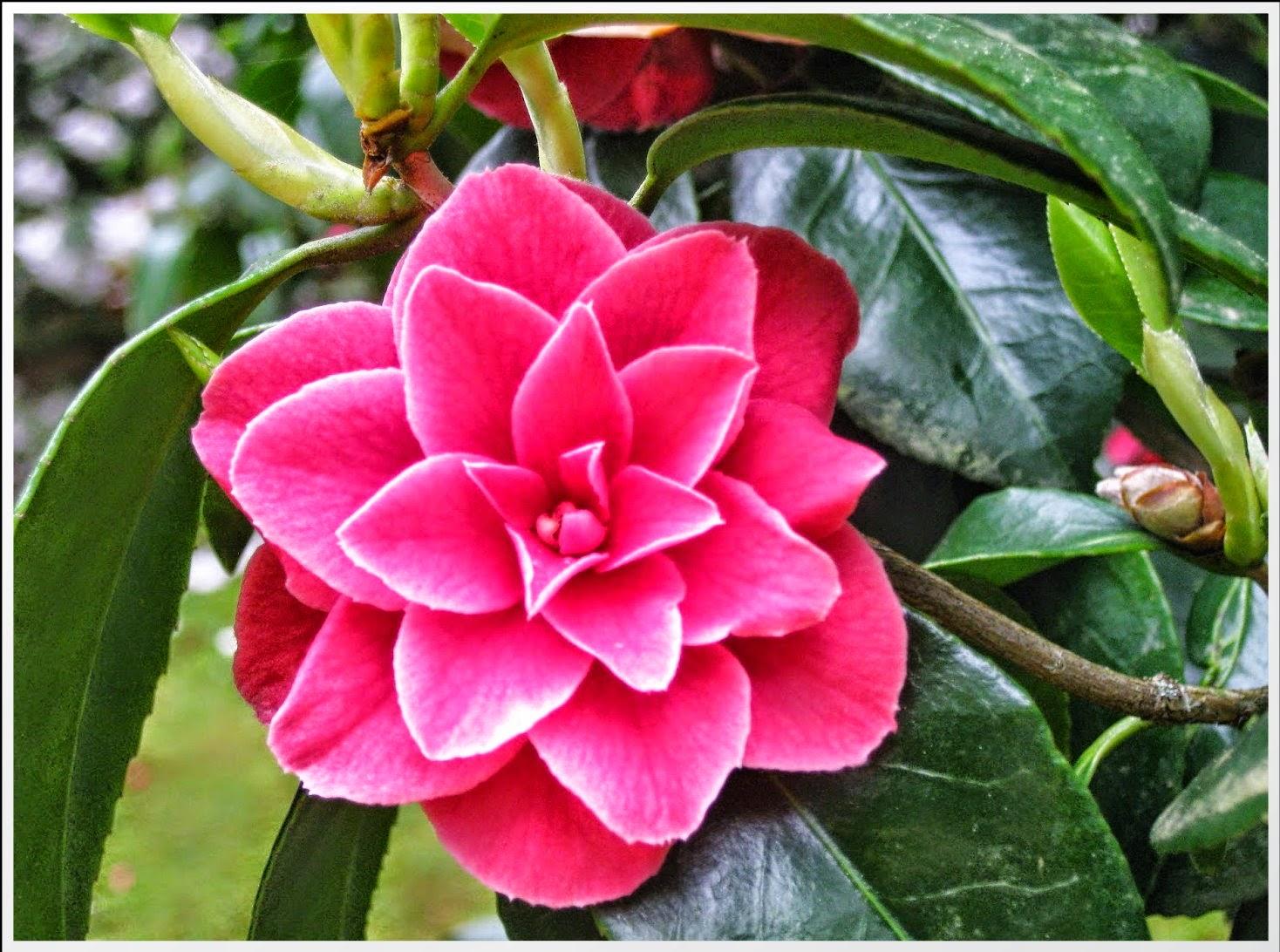 самые красивые цветы картинки - Фото-картинки самых красивых цветов!!!! ВКонтакте