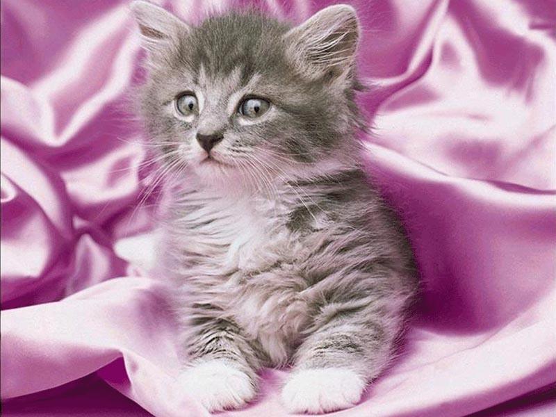 gatitos lindos y tiernos