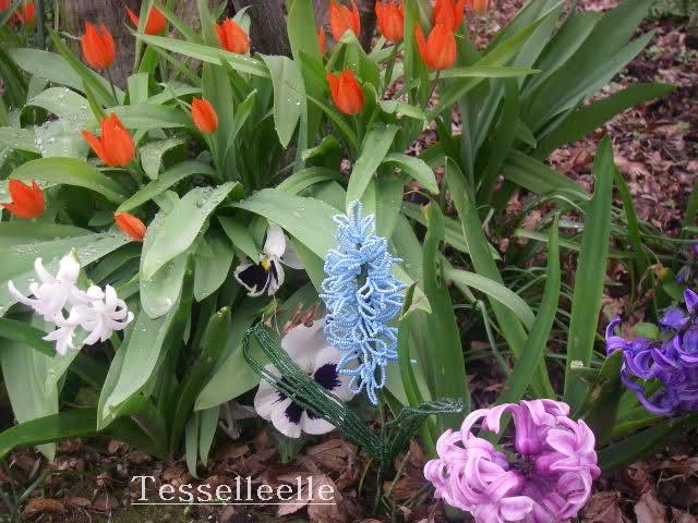 Giacinti, tulipani e pansè