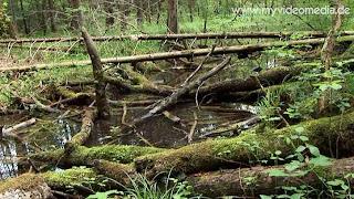 unspoilt nature near Georgenstein