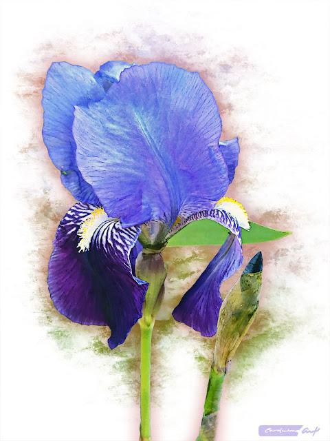 flores lirios silvestres