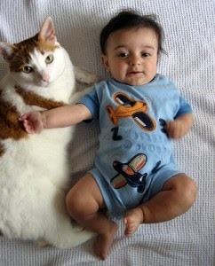 Mad About Pets Guest Post Newborn Babies And Cats Can