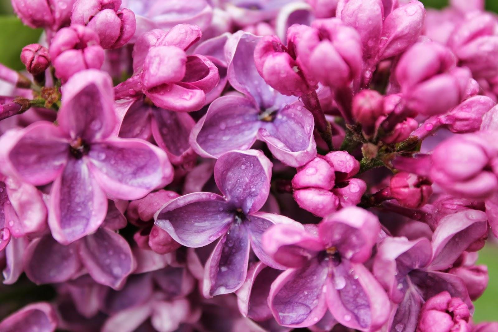 http://www.patriciabowe.com/Perfume-Oils/LilacOil.html