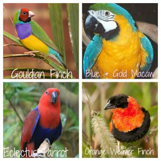 My Future Bird List