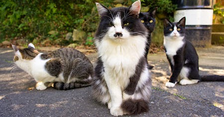 Attracting A Cat To A Settlement Fallout