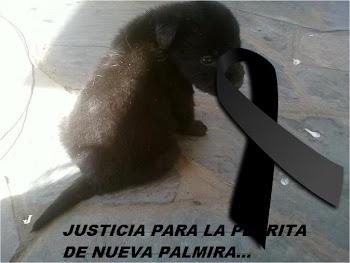 JUSTICIA PARA LA PERRA ASESINADA!