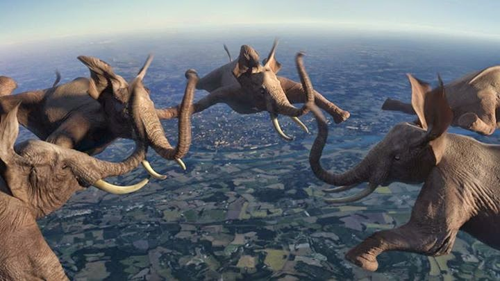 10-Nicolas-Deveaux-Videos-of-Animals-doing-incredible-Things-www-designstack-co