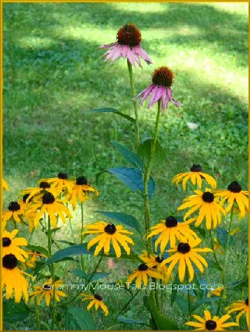 black-eyed Susan and purple cone-flowers image