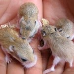 Tips to Maintain Hamster - 9 Steps to Take Care of Baby Hamster