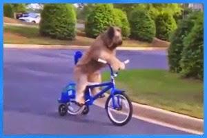 Die lustigsten Videos der Welt
