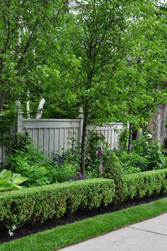 Three dogs in a garden a poolside garden in forest hill for Garden design ideas ontario