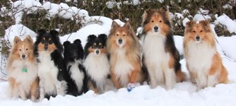 The KNIGHTs Shelties